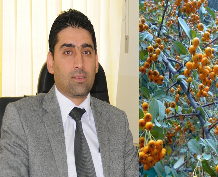 Sarbast Ahmed: cranberries have impact on Heart and Blood pressures
